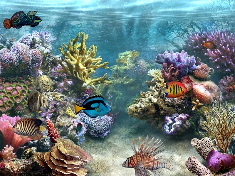 S sim aquarium screensaver megagames for Swimming fish screensaver