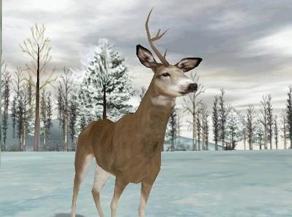 Deer hunter 2005 crack full